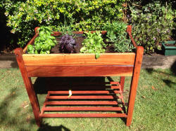 Wide and Tall Planter Box with herbs and vegetables.